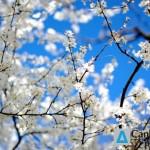 2016-03-20_Честита_Първа_Пролет
